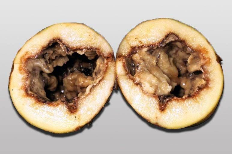 Заболевания картофеля и борьба с ними