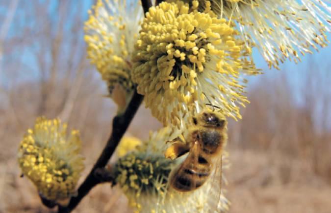Сколько килограммов мёда надо для зимовки пчёл