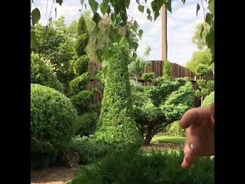 Способы обрезки можжевельника осенью: фото + видео