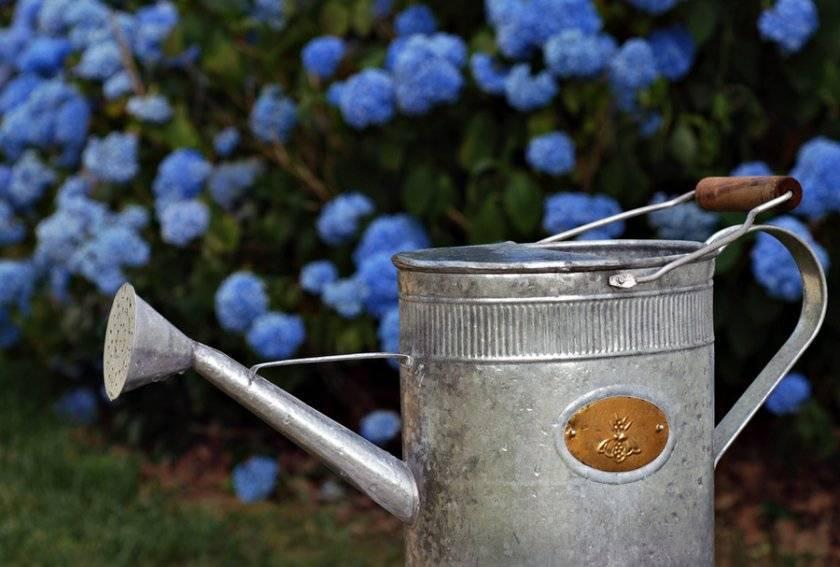 Какой грунт нужен для посадки гортензии садовой