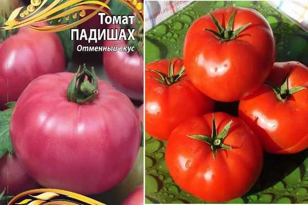 Томат розовый царь: характеристика и описание сорта, урожайность с фото