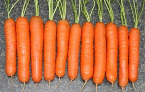 Какие сорта моркови лучше выращивать в средней полосе россии.