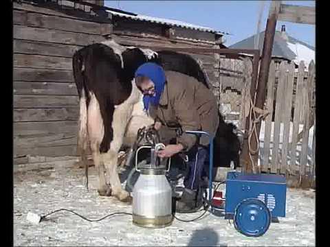 Особенности эксплуатации доильного аппарата для коров «доярушка»