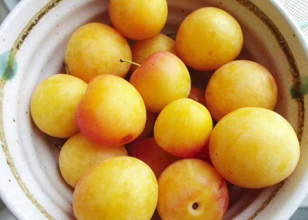 Описание сливы сорта медовая: характеристики сорта, фото, отзывы, видео