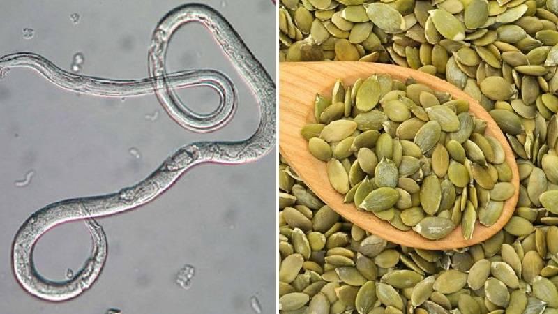 Как действуют тыквенные семечки на паразитов?
