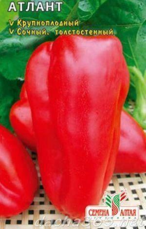 Перец атлант: описание сорта, отзывы, фото, характеристика плодов, достоинства и недостатки