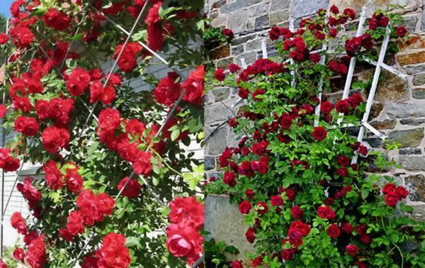Опоры для роз своими руками — обзор разновидностей