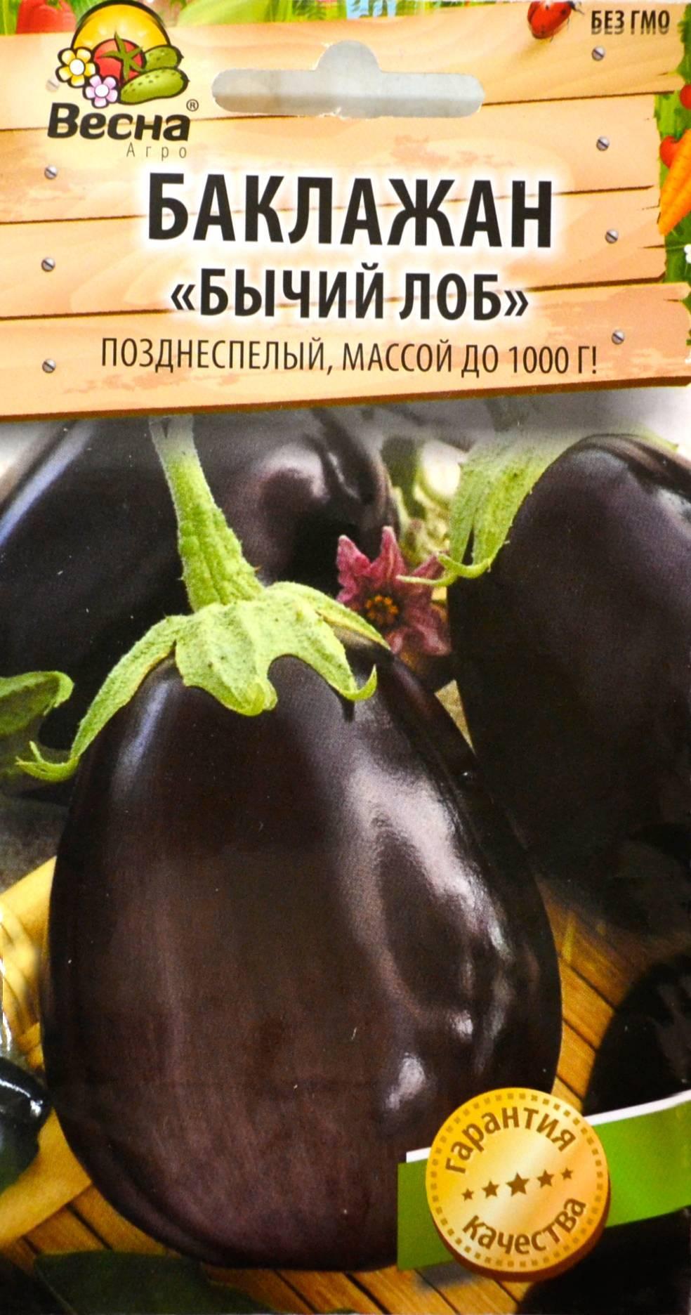 Баклажан бычий лоб — отзывы, урожайность, характеристика и описание сорта