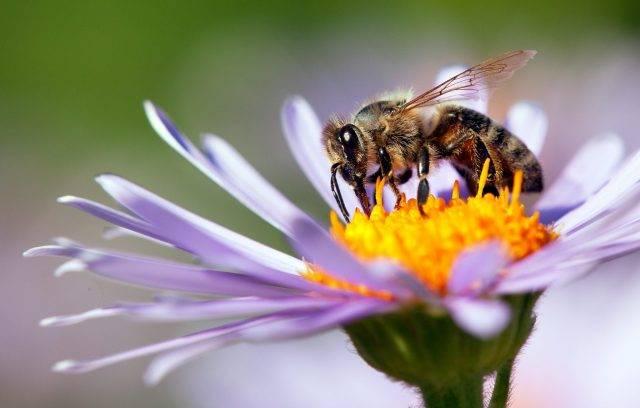 Ноземацид: инструкция по применению для пчел, состав