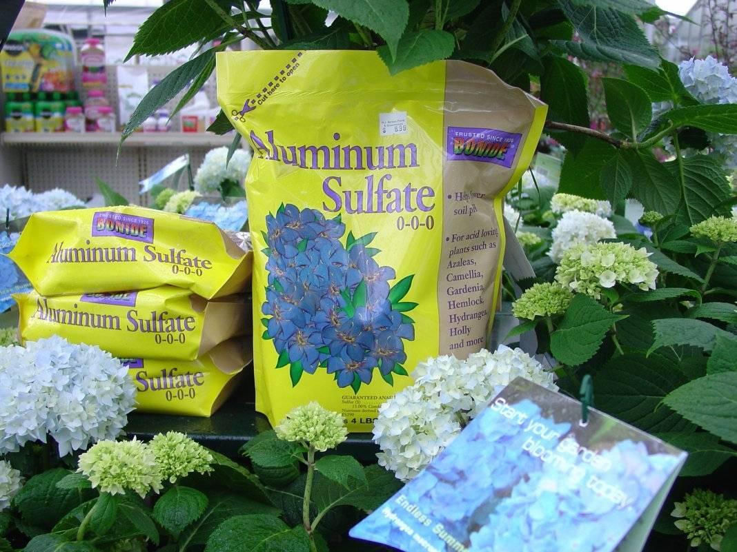 Пятна на листьях гортензии: причины и их лечение