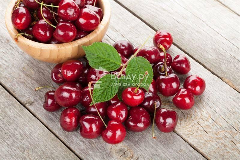 Витаминный состав черешни – ягода для очищения организма и похудения