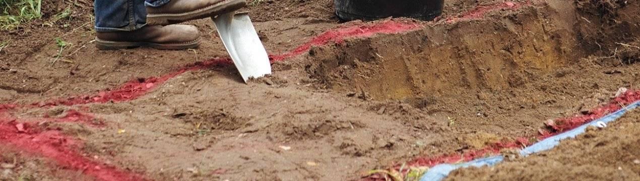 Почва для гортензии: как подкислить грунт? какую землю любит? как полить землю лимонной кислотой? пропорции