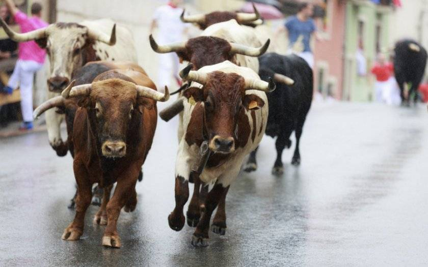 Бонитировка крупнорогатого скота: особенности процедуры, алгоритм выполнения, критерии оценки животных