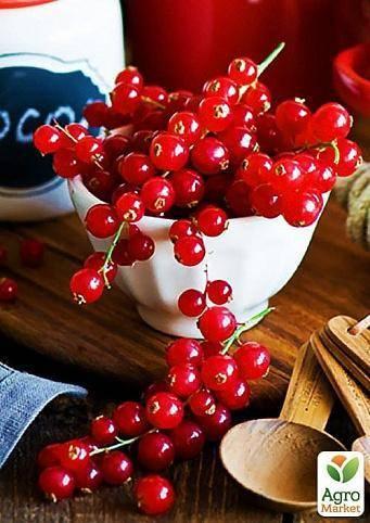 Красная смородина виксне: отзывы, фото сорта, описание