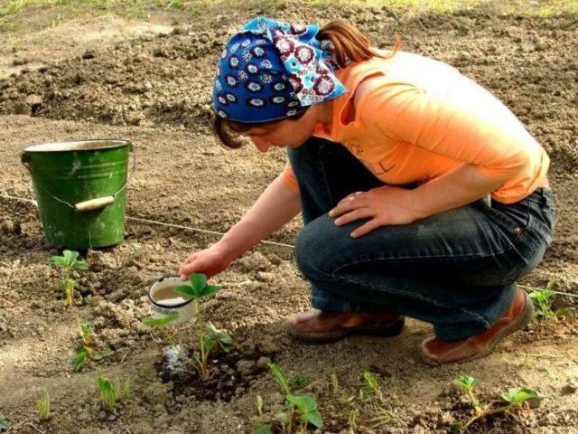 Молочная сыворотка для растений: как пользоваться, защитить и подкормить сывороткой помидоры, огурцы и другие растения