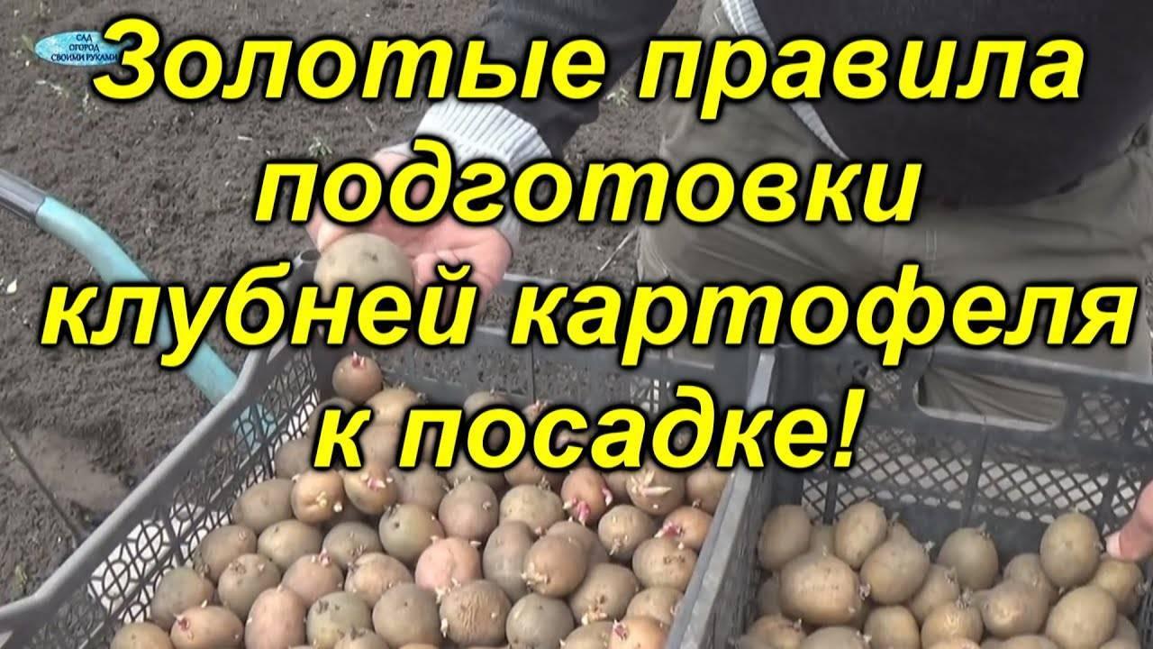 Как сажать картофель: сроки, подготовка почвы, способы посадки