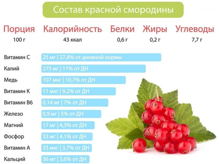 Поговорим о пользе и вреде листьев красной и черной смородины, их полезных свойствах и противопоказаниях
