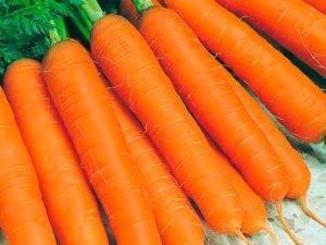 Морковь сорта «сластена»: описание и советы по выращиванию