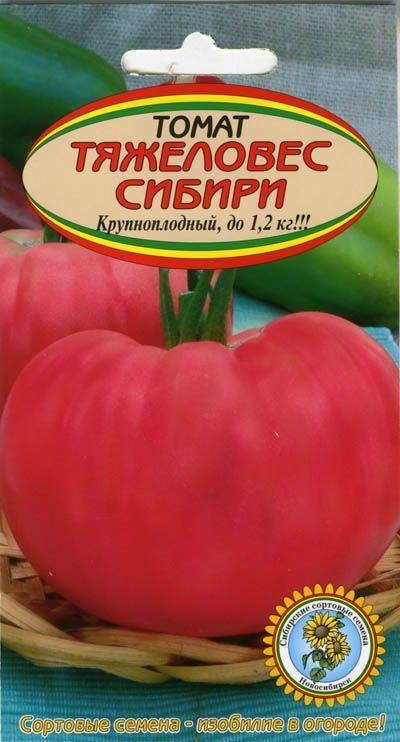 Фото, видео, отзывы, описание, характеристика, урожайность сорта томат «тяжеловес сибири»