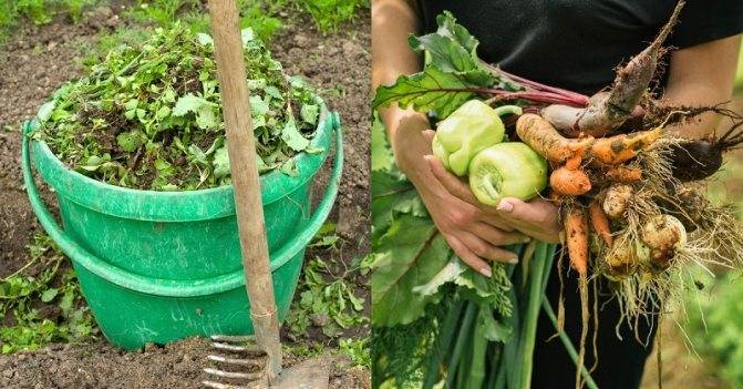 Зелёное удобрение: как приготовить органическую подкормку из травы, в том числе крапивы, правильно её использовать, отзывы