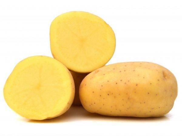 Картофель ред стар — описание сорта, фото, отзывы, посадка и уход