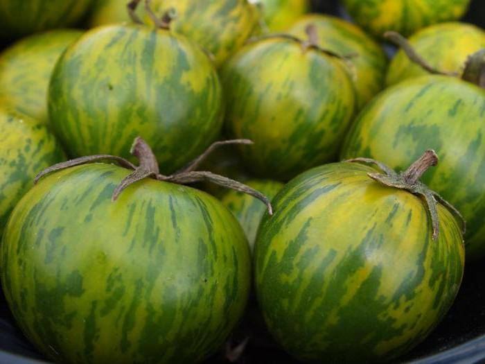 Сорт томата «малахитовая шкатулка»: описание, характеристика, посев на рассаду, подкормка, урожайность, фото, видео и самые распространенные болезни томатов