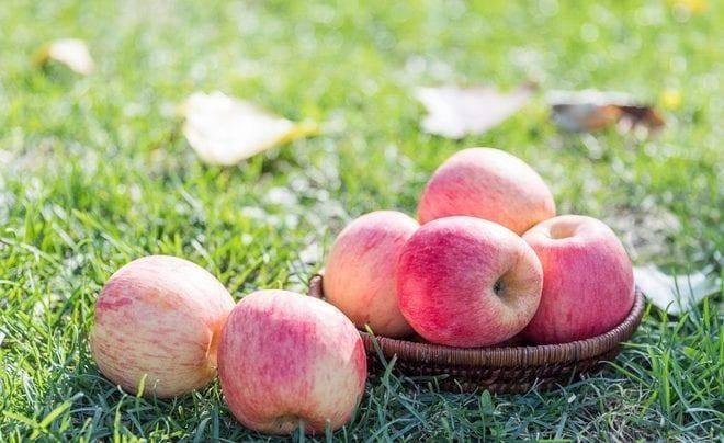 Яблони россошанские полосатые: описание сорта и его фото, характеристики и особенности
