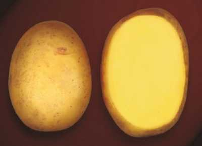 Картофель крона (кроне): описание сорта, фото, отзывы, вкусовые качества, урожайность