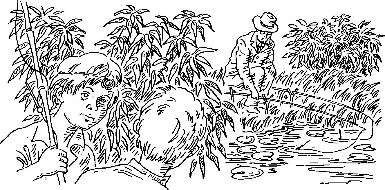 Ель канадская коника — посадка и уход в открытом грунте: основные правила выращивания