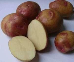Картофель пикассо – подробное описание высокоурожайного голландского сорта