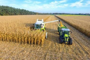 Правильная технология посева и возделывания кукурузы