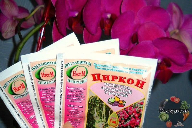 Применение препарата циркон на даче и огороде