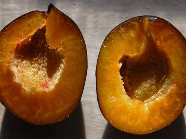 Особенности и преимущества сливы сорта блюфри?