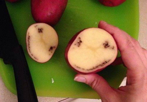 Болезни картофеля: описание популярных форм, фото, причины, как бороться