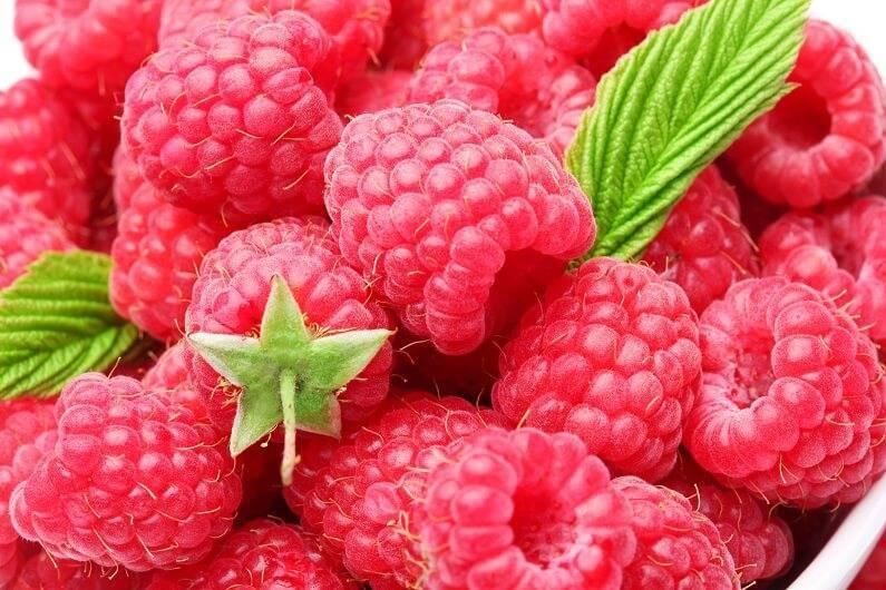 Малина геракл — замечательная целебная ремонтантная ягода