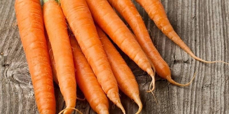 Морковь маэстро f1 отзывы