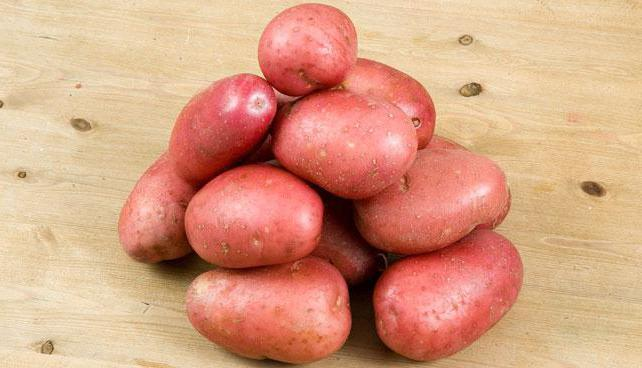 Выращиваем картофель журавинка: характеристика и описание сорта, фото