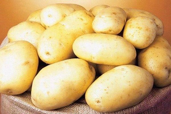 Сорт картофеля «королева анна»: характеристика, описание, урожайность, отзывы и фото