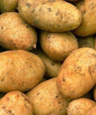 Картофель «бриз»: описание сорта, характеристика, фото, отзывы