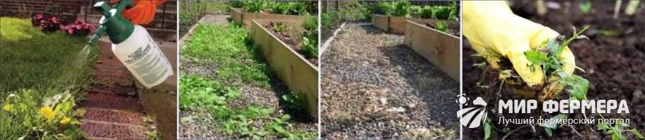 Раундап от сорняков: инструкция по применению, как разводить, дозировка