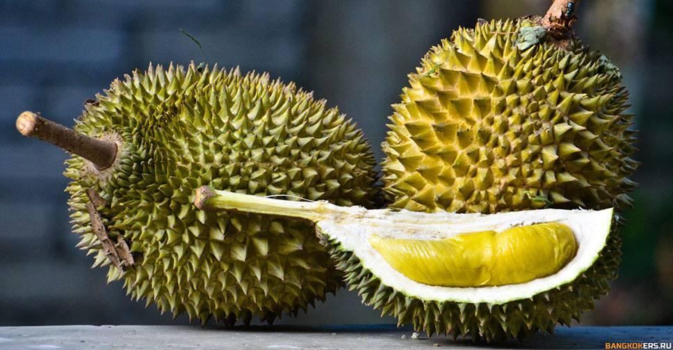 Глаз дракона: что скрывается за панцирной кожурой фрукта лонган