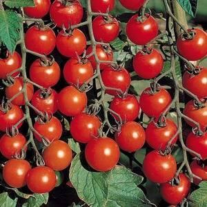 Томат «о-ля-ля-ля»: описание сорта, фото и основные характеристики  помидоры