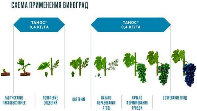 Описание 24 лучших фунгицидов для сада, механизм действия и инструкция по применению