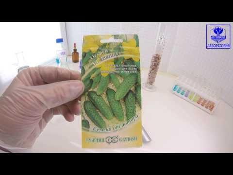 Самоопыляемый гибрид огурцов «лилипут f1»: фото, видео, описание, посадка, характеристика, урожайность, отзывы
