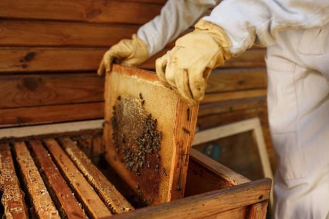 «апимакс» для пчел — инструкция по применению