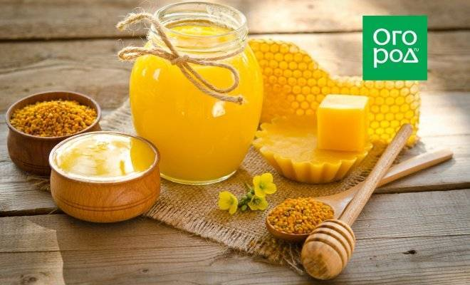 Пчелиное маточное молочко: польза и вред, как принимать