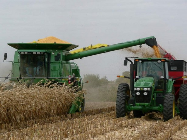 Возделывание кукурузы: технология выращивания от посева до уборки