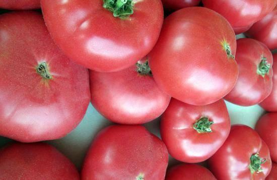 Позднеспелые сорта томатов: подробный перечень разновидностей помидор с описанием урожайности и рекомендациями по выращиванию в теплицах и открытом грунте