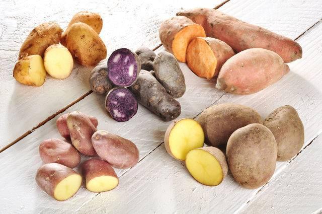 Как выбрать картофель на посадку: лучшие сорта, основные требования