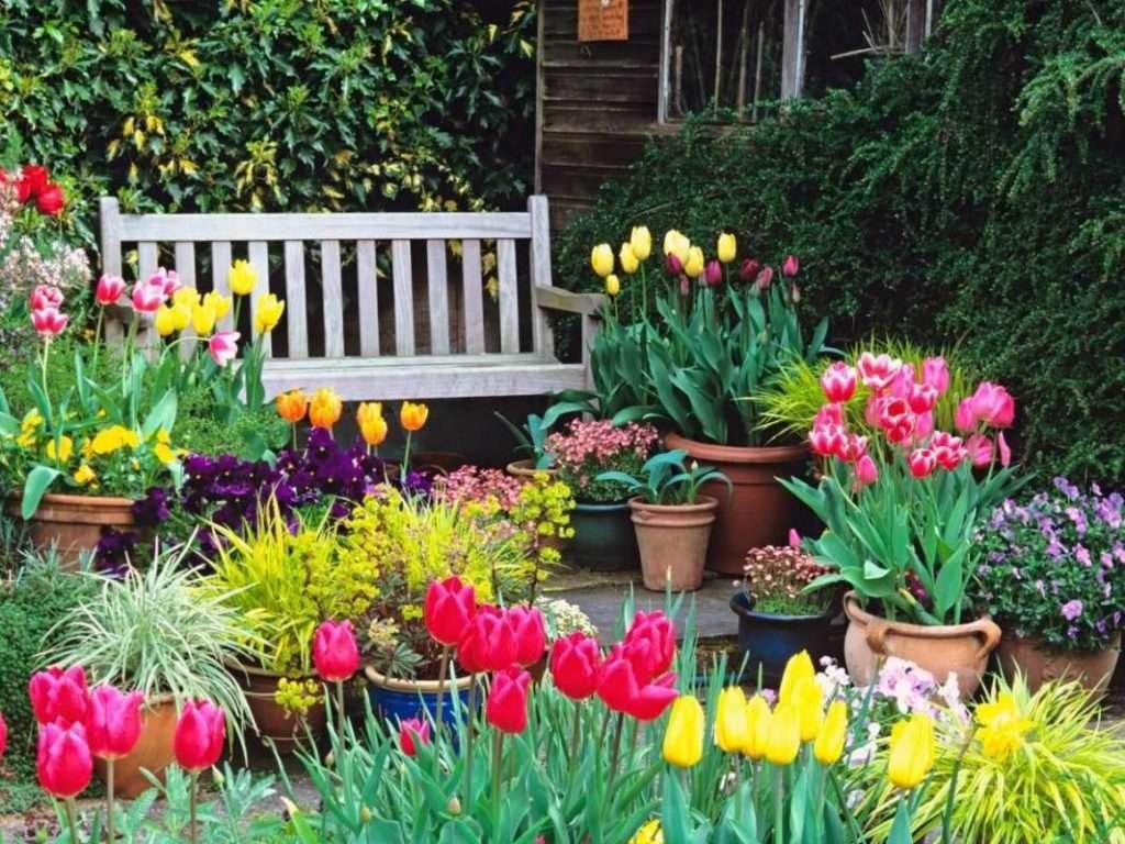 Ирисы в ландшафтном дизайне: варианты оформления сада, посадка, уход